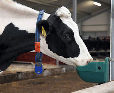 Bebedero de plástico, rotomoldeo para equipamiento de granjas