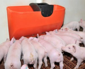 Cerdos equipamiento granja Rotobasque, rotomoldeo para equipamiento de granjas