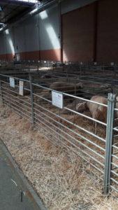 ovejas rotomoldeo Rotobasque visita Figan